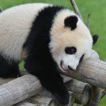 天王寺動物園にパンダはいる?その他子供連れに役立つ情報!