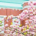 造幣局の桜の通り抜けにペットはOK?屋台や期間はどんな感じ?